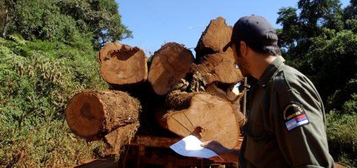 Misiones promoverá agentes públicos especializados en preservación y fiscalización de bosques nativos