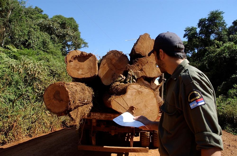 La Ingeniería Forestal debe estar presente en el proyecto de modificación del directorio y consejo asesor del INTA