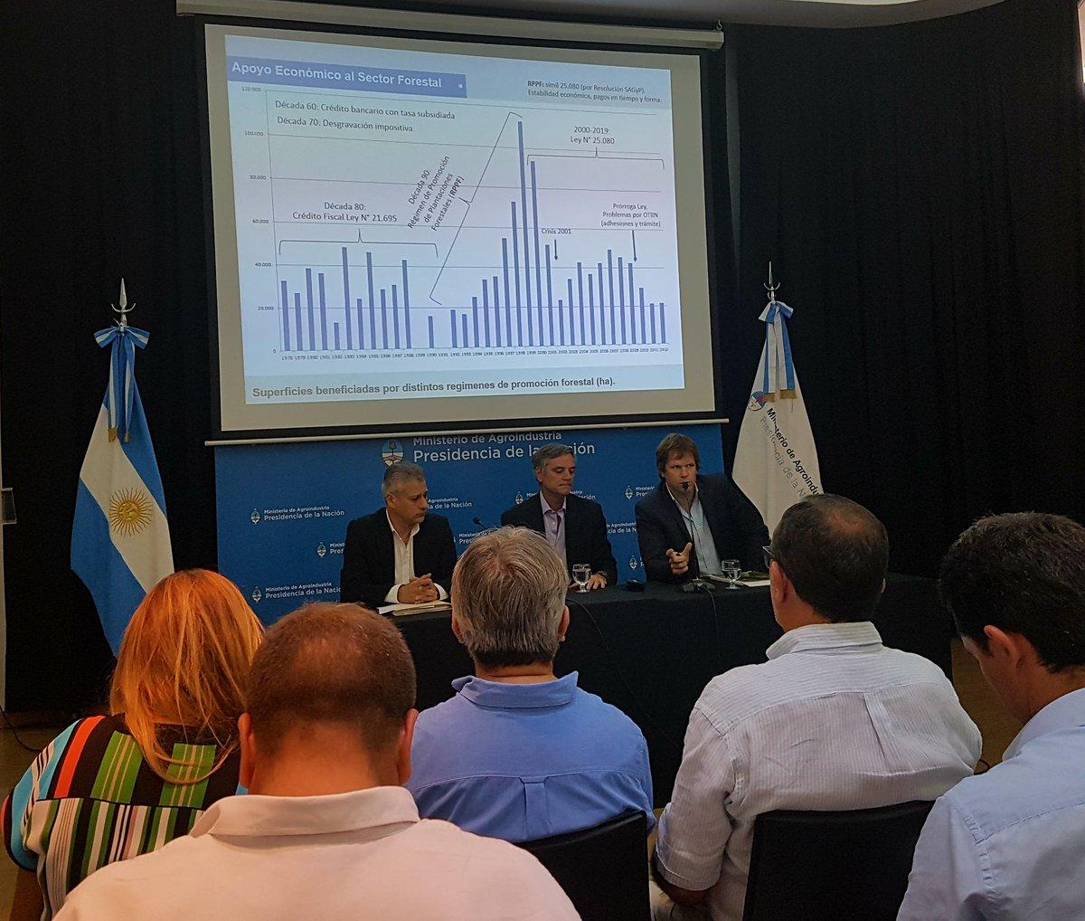 Se aprobó en la Argentina la prórroga de la Ley 25.080 de inversiones forestales por 10 años más