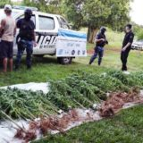 GN interceptó marihuana que habían despachado en encomiendas