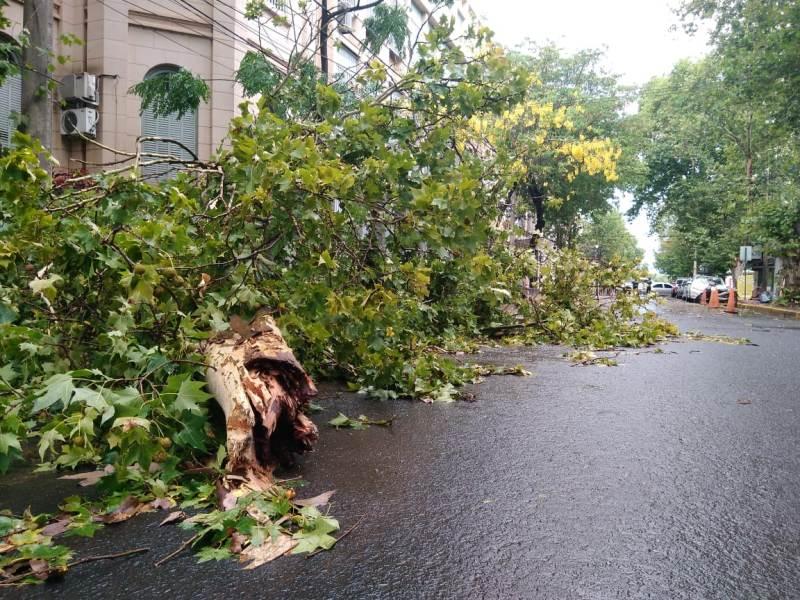 El temporal que azotó a Posadas y Garupá tuvo vientos tornádicos de hasta 80 km/h e incluyó caída de granizo
