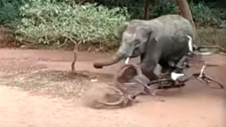 Un elefante suelto generó destrozos en un pueblo de la India