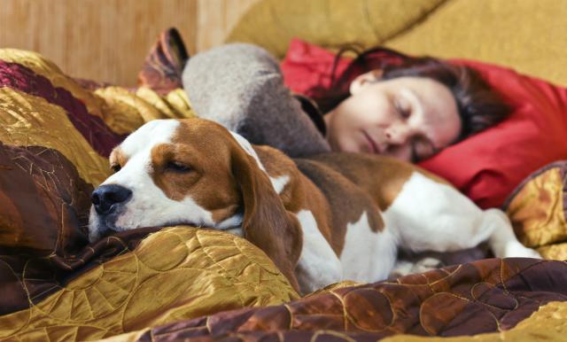 Científicos afirman que las mujeres duermen mejor con los perros que con sus parejas