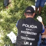 Narcos querían enviar una carga de marihuana escondida dentro de un secarropas