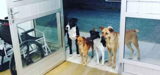 Conocé la tierna historia de los cuatro perros que esperaron en la puerta de un hospital a que su dueño fuera atendido