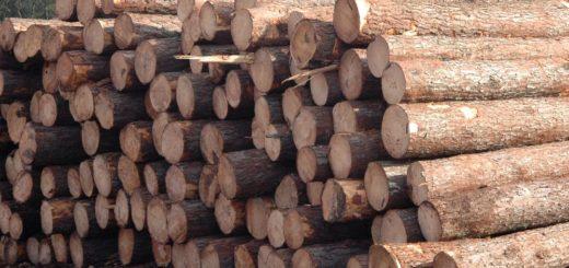 Corrientes: cayeron dos proyectos de energía de biomasa forestal adjudicados en el Renovar 2 por dificultades para acceder al financiamiento
