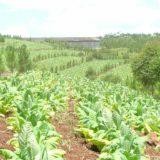 Avanzarán en un marco legislativo y un sistema de cámaras para paliar la situación desesperante de los productores de té