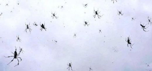 Escalofriante: se viralizó un vídeo de una lluvia de arañas en Brasil