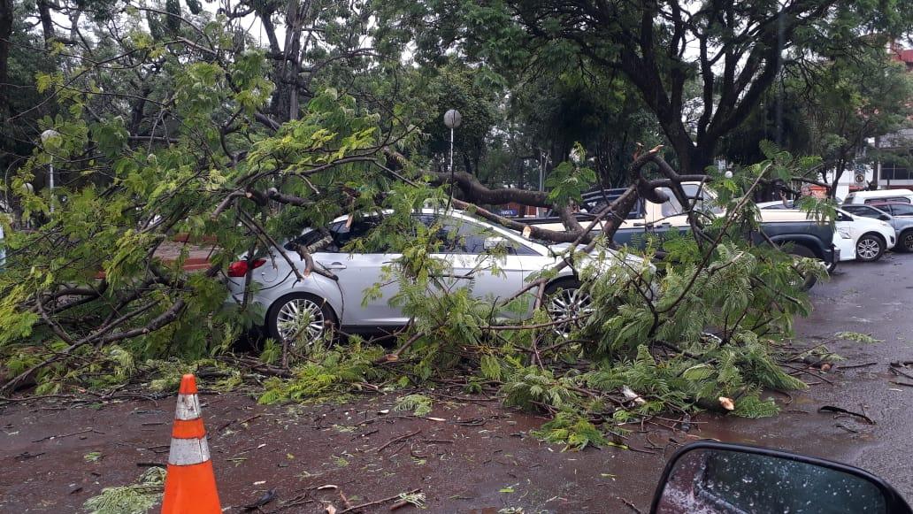 Oberá: la tormenta dejó como saldo el derrumbe de un techo en la Epet y árboles caídos sobre una casa y automóvil