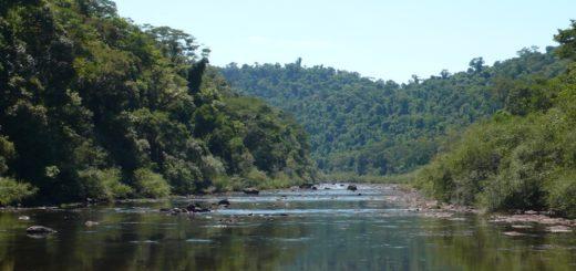 La sequía será la principal limitación de crecimiento de los bosques en el mundo