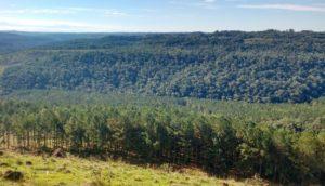 Ley 25.080: Agricultura anunció pagos de planes forestales por más de 15 millones de pesos para productores de Misiones