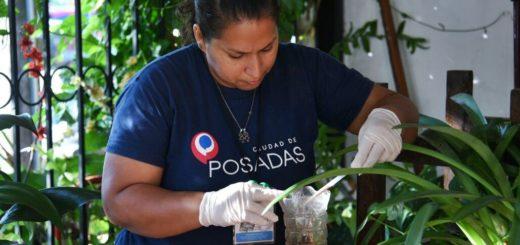 Continúan los operativos LIRAa y ovitrampa en los barrios de Posadas para la prevención de vectores