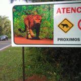 Sólo en Misiones, se estima que más de 5.000 animales mueren al año en rutas que atraviesan áreas naturales protegidas