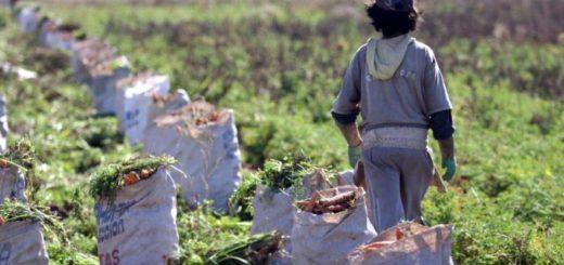 Por decreto aprobaron el Programa de Erradicación del Trabajo Infantil en Misiones