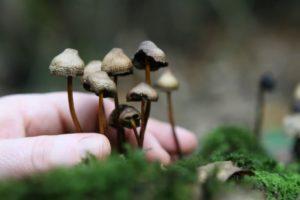 Estados Unidos: Denver quiere ser la primera ciudad del país en legalizar los hongos alucinógenos
