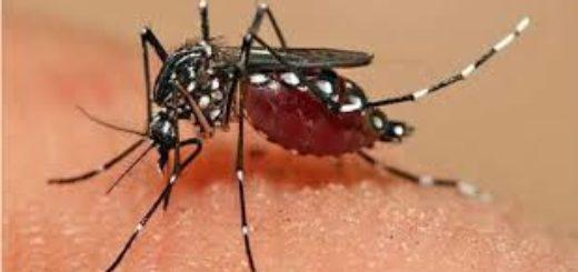 En Paraguay aseguran que hay condiciones para una epidemia de dengue