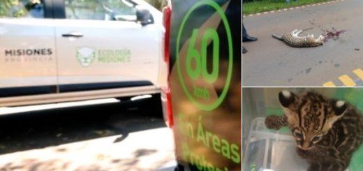 Crearán un registro de infractores que exceden la velocidad permitida en áreas protegidas de Misiones