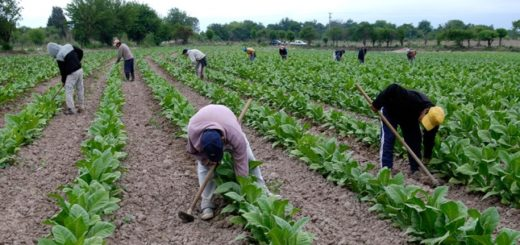 Tabacaleros de Misiones se reunieron con Nación para buscar soluciones ante las problemáticas del sector