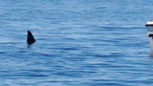 Susto en una playa de Santa Clara del Mar: un tiburón fue visto nadando cerca de la orilla