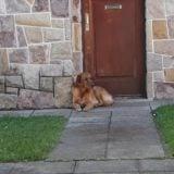 Final feliz para el perro que fue abandonado por sus dueños en una casa de Mar del Plata