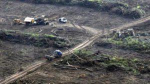 """""""Los desmontes profundizan la pobreza"""", advierten los obispos del NOA con un duro documento en el que piden frenar con la extracción ilegal de los bosques"""