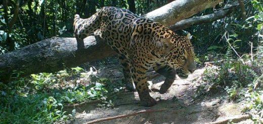 Península, un área protegida de valor ambiental global por sus indicadores de biodiversidad en la selva misionera