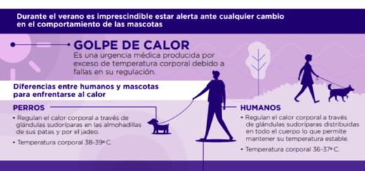 Indican que un perro puede morir en tan sólo 15 minutos por un golpe de calor sino recibe asistencia médica a tiempo