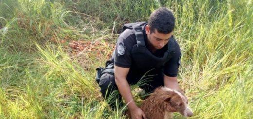 Policías rescataron a un perro que cayó a un pozo de agua en Posadas