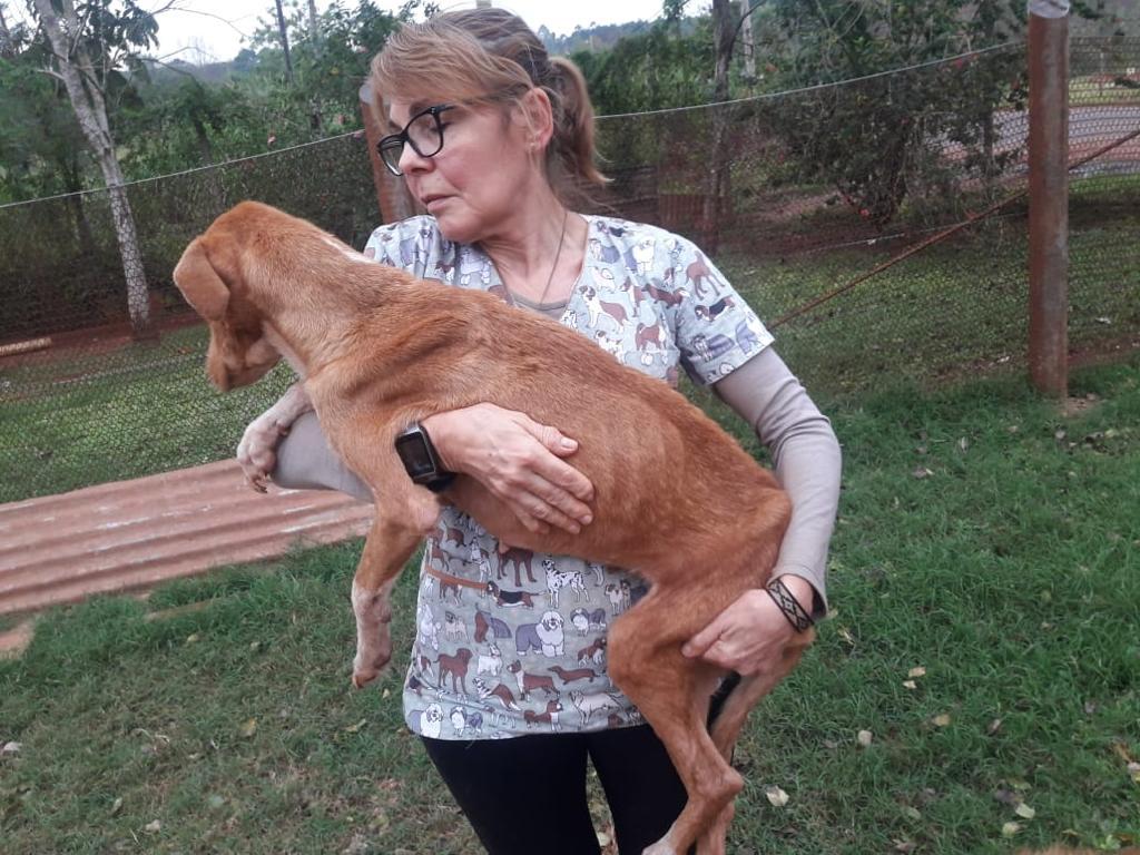 Eldorado: le rescindieron el contrato a la coordinadora del centro de Zoonosis