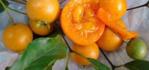 Se publicaron las actualizaciones en el Código Alimentario Argentino: la novedad es que reconocieron a la Guavirá como fruta