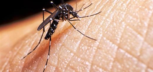 Se diagnosticaron 20 casos de dengue en Misiones y afirman que hay otros 50 en estudio