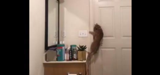 Video: la impresionante maniobra de un gato para escapar del baño