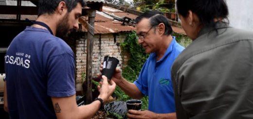Dengue: continúan instalando trampas para atrapar mosquitos adultos y determinar si están infectados