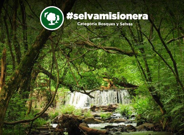 #VotaSelvaMisionera: la morada del yaguareté puede convertirse en una de las 7 Maravillas Naturales de la Argentina