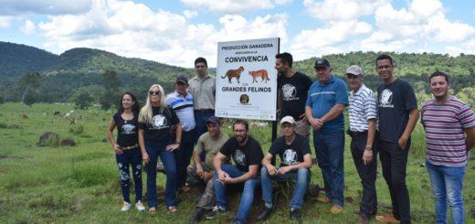Misiones es la primera provincia del país en otorgar una certificación de producción ganadera en convivencia adecuada con el yaguareté
