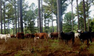 Forestales esperan recuperar la confianza en el incentivo de la Ley 25.080 y el financiamiento del Seguro Verde