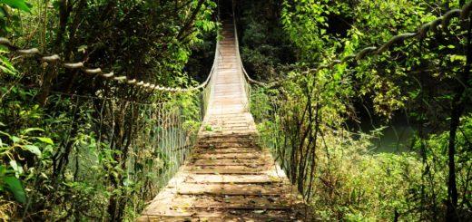 Selva Misionera: el bosque más biodiverso de Argentina