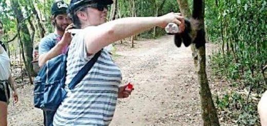 Indignante acción de una turista en el Parque Nacional Iguazú: le dio de beber gaseosa a un mono