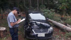 Andresito: localizan y multan a un ciudadano brasileño por atropellar y matar a un tapir sobre la Ruta Provincial 19