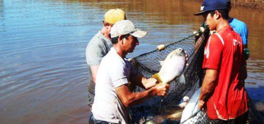 Mostraron cómo debe ser el procedimiento de cosecha de peces