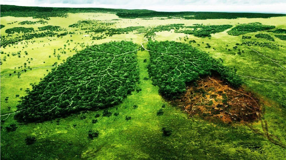 Se extiende la convocatoria para proyectos de desarrollo tecnológico en medioambiente