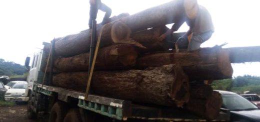Ecología retuvo un camión con madera nativa sobre la ruta provincial 13