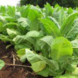 Desde APTM afirman que ya está reglamentado el Monotributo especial para productores y se encuentra funcionando desde ayer