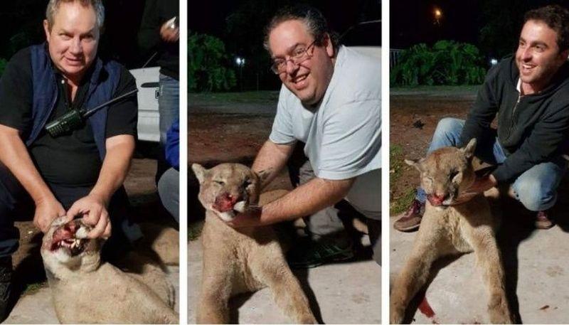 Maltrato animal: detuvieron en Buenos Aires a un funcionario que arrastró a un perro en su auto y faenó un puma