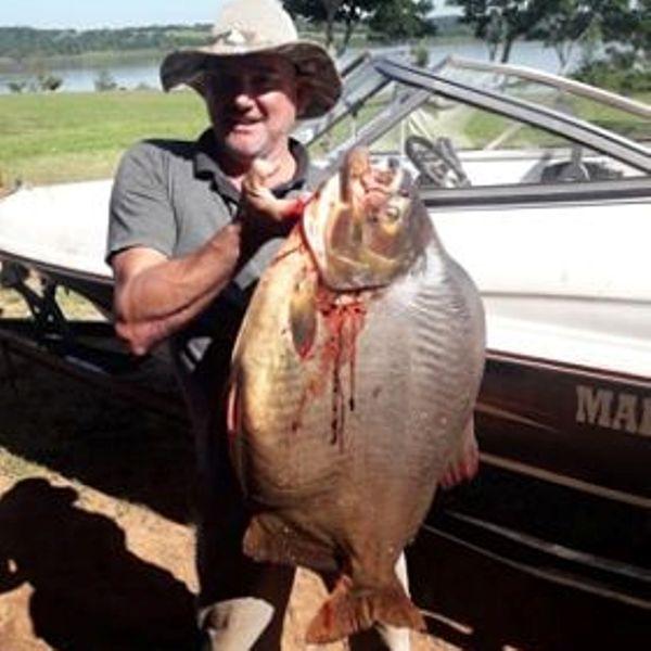 Corpus: pescaron un pacú de 24 kilos en el río Paraná
