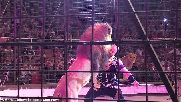 #Video: el aterrador momento en que un león ataca a su entrenador en medio de un show de circo