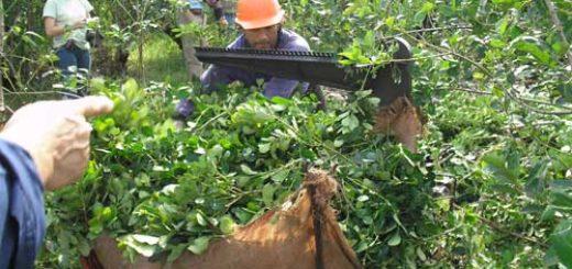 Nación fijó los nuevos precios de la yerba en $11,55 la hoja verde y $43,89 la canchada