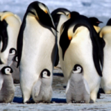 Avistan por primera vez un pingüino blanco en las Islas Galápagos