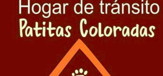 """La Asociación Protectora de Animales de Oberá """"Patitas Coloradas"""" realizará su tradicional desfile de mascotas"""