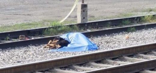 Fue atropellado por un tren y su perro se negó a separarse del cadáver